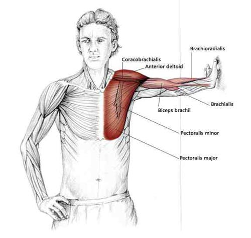 chest stretch to prevent shoulder problems