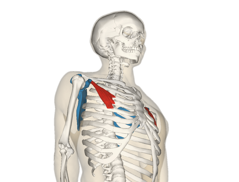 pectoralis minor and shoulder problems