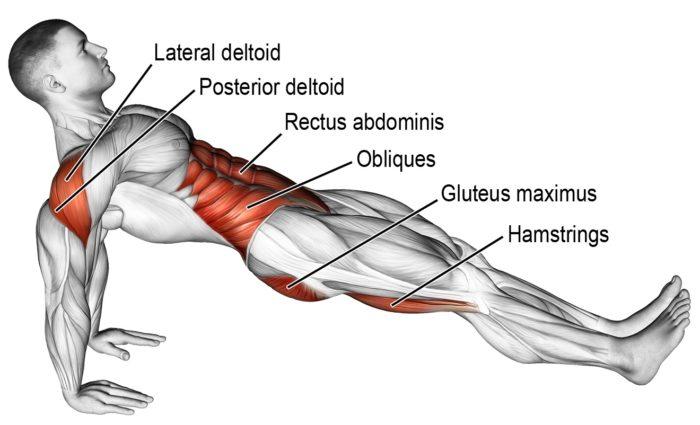 shoulder extension - reverse plank